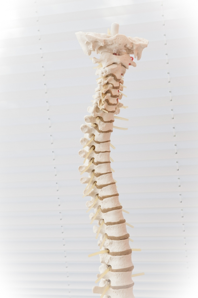 Subluxations demonstrated with model at Brandon chiropractor